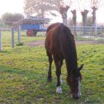 new.paard
