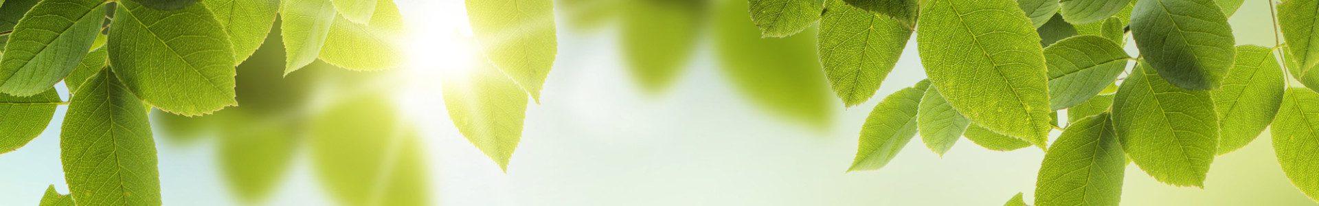 bigstock-Spring-or-summer-season-abstra-44696878-1920x300